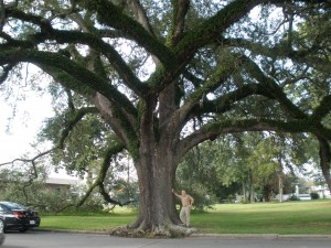 A.S. under the live oak opposite City Auditorium [Waycross GA]